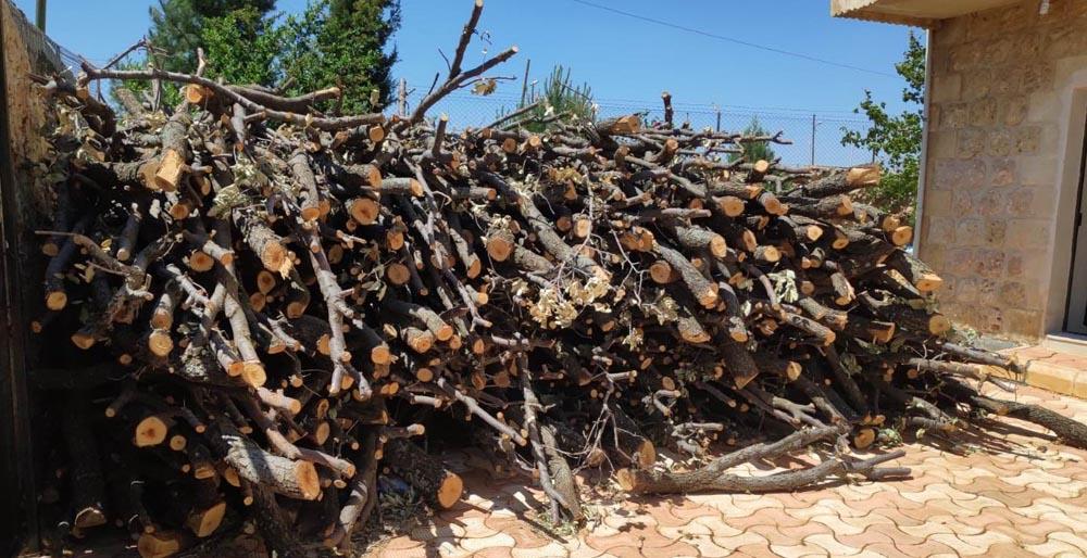Ormanlık alanda kaçak ağaç kesen şahıs gözaltına alındı