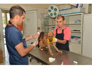 Diyarbakır'da 979 sokak hayvanın bakım ve tedavileri yapıldı