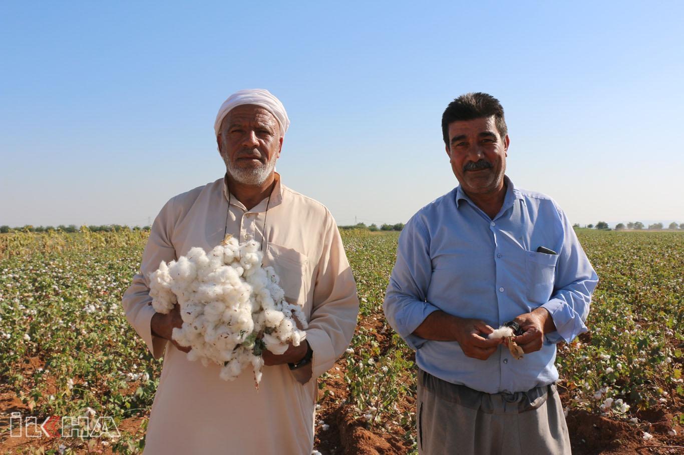 Pamuk üreticileri: Düşük fiyat pamuk üretimini bitirir.