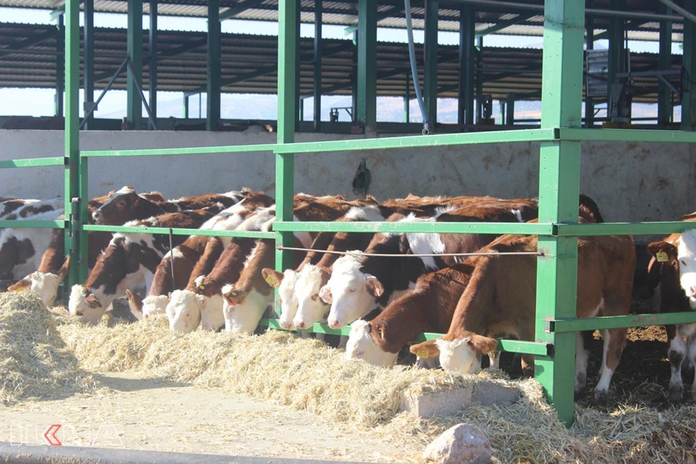 Süt üreticileri zamlardan şikâyetçi.