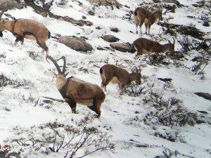 Adıyamanda yaban hayvanları için doğaya yem bırakıldı