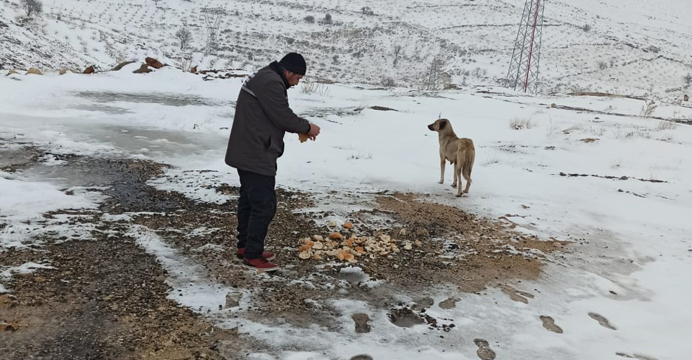 Sokak hayvanlarına genel yemleme yapıldı