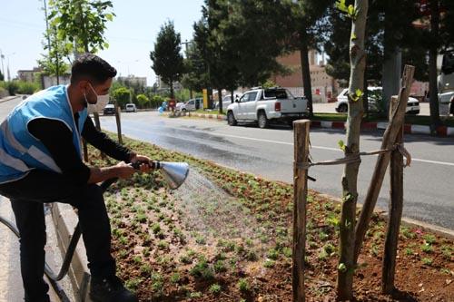 Büyükşehir Belediyesi yeşil bir Mardin için çalışmalara hız verdi