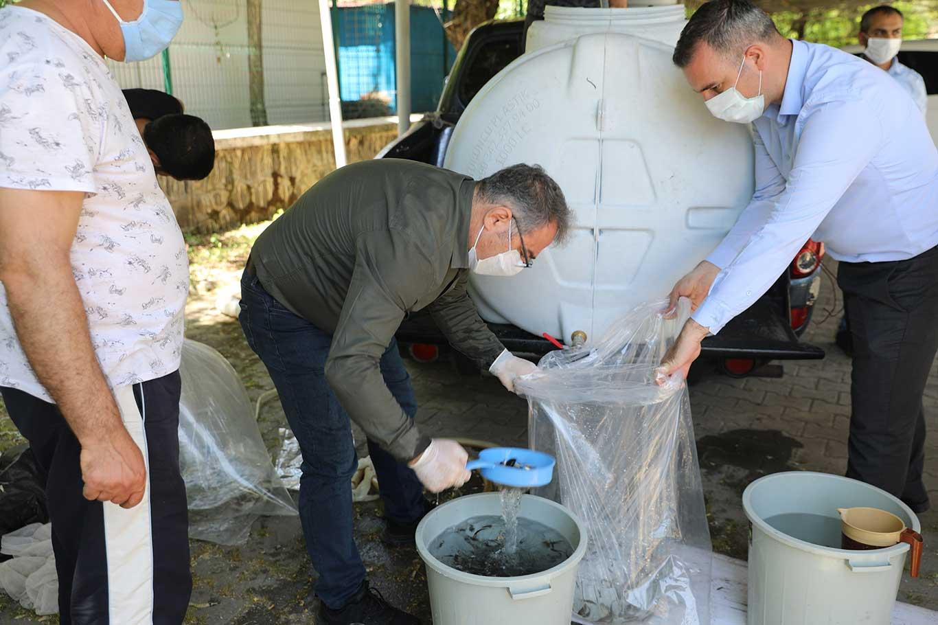 Diyarbakır Tarım ve Orman İl Müdürlüğü ildeki göletlere 180 bin adet sazan yavrusu bıraktı.