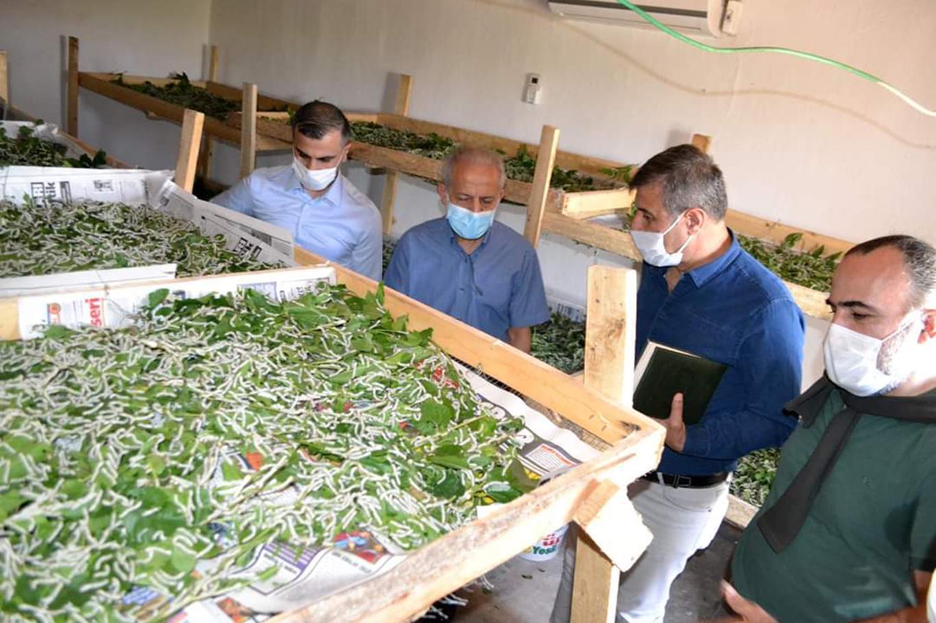 Harran Üniversitesinden ipekböceği projesine ziyaret.