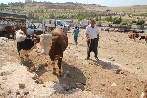 Coronavirus hayvan pazarlarını da vurdu, kurbanlıklar elde kaldı
