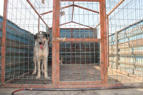 Midyat Belediyesi Sokak Hayvanlarına Destek