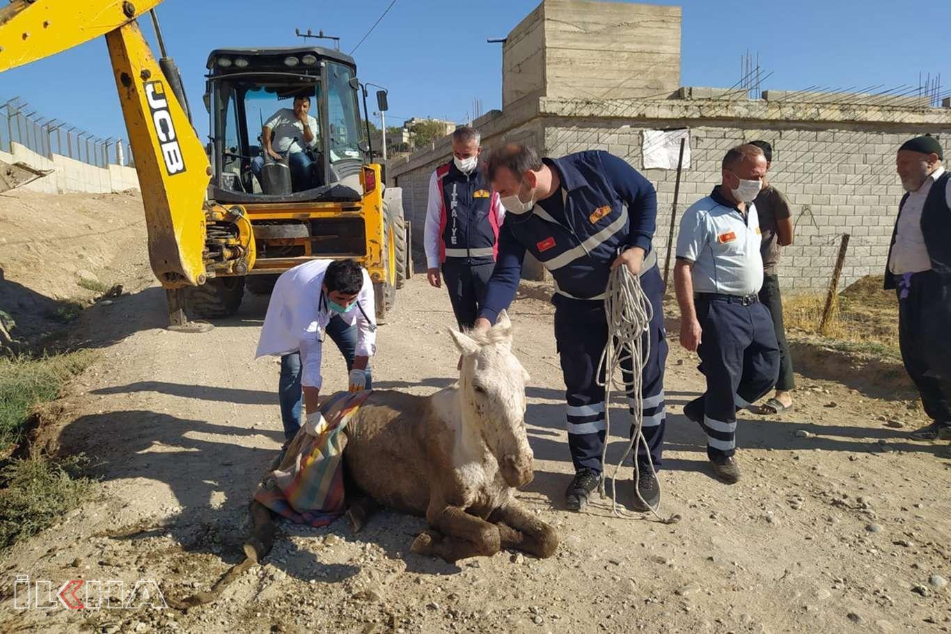 Bataklığa saplanan sahipsiz at kurtarıldı