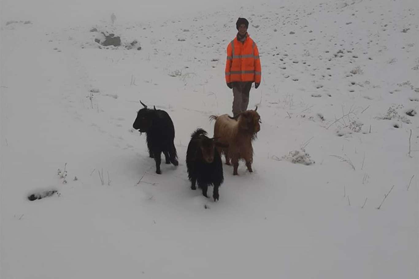 Karda mahsur kalan hayvanlar kurtarıldı