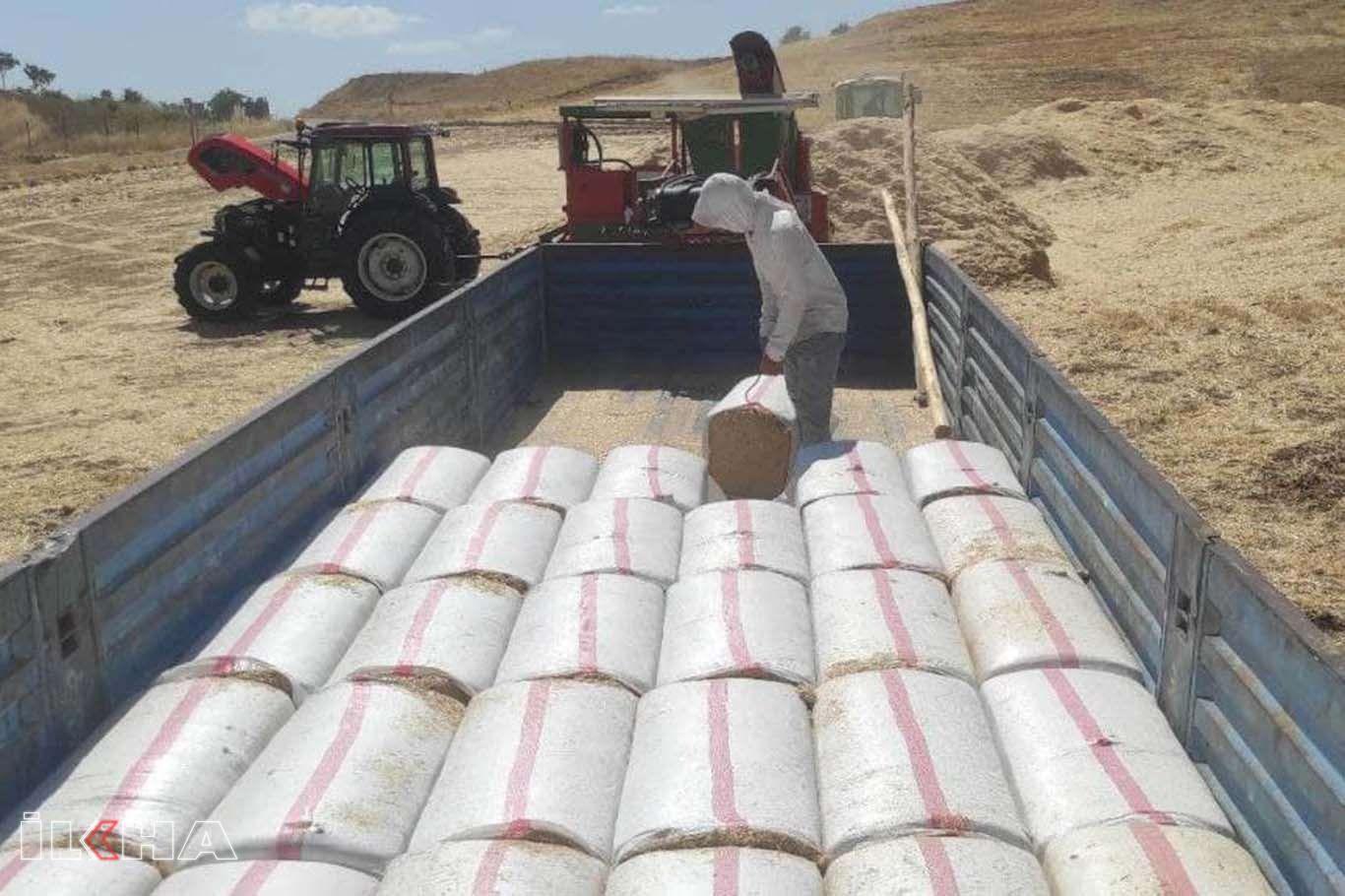 Kavurucu sıcaklık altında saman işçilerinin zorlu mesaisi