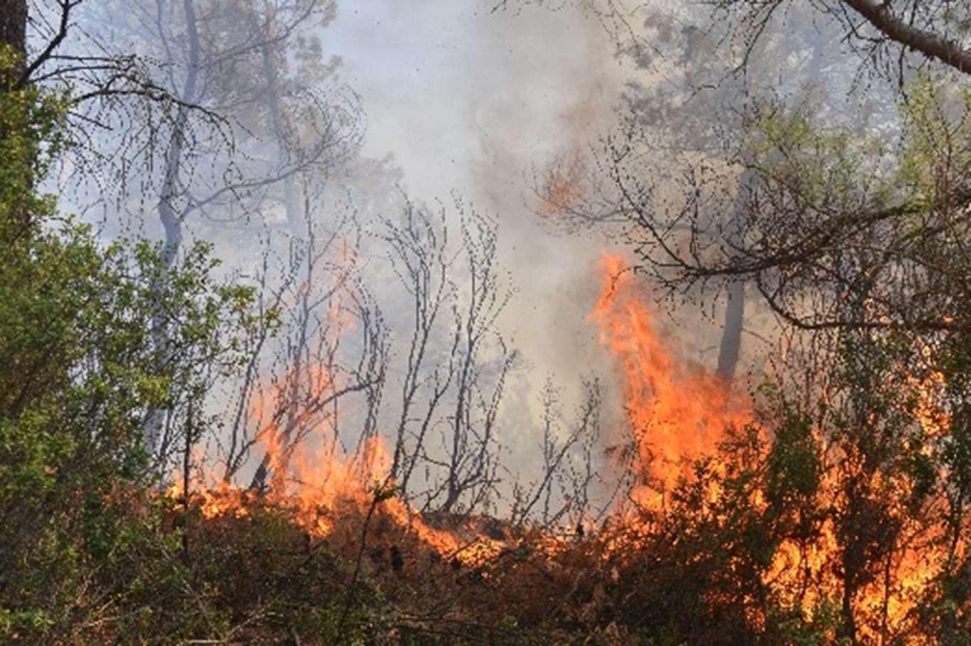 Manavgatta orman yangınında ölenlerin sayısı 7ye yükseldi