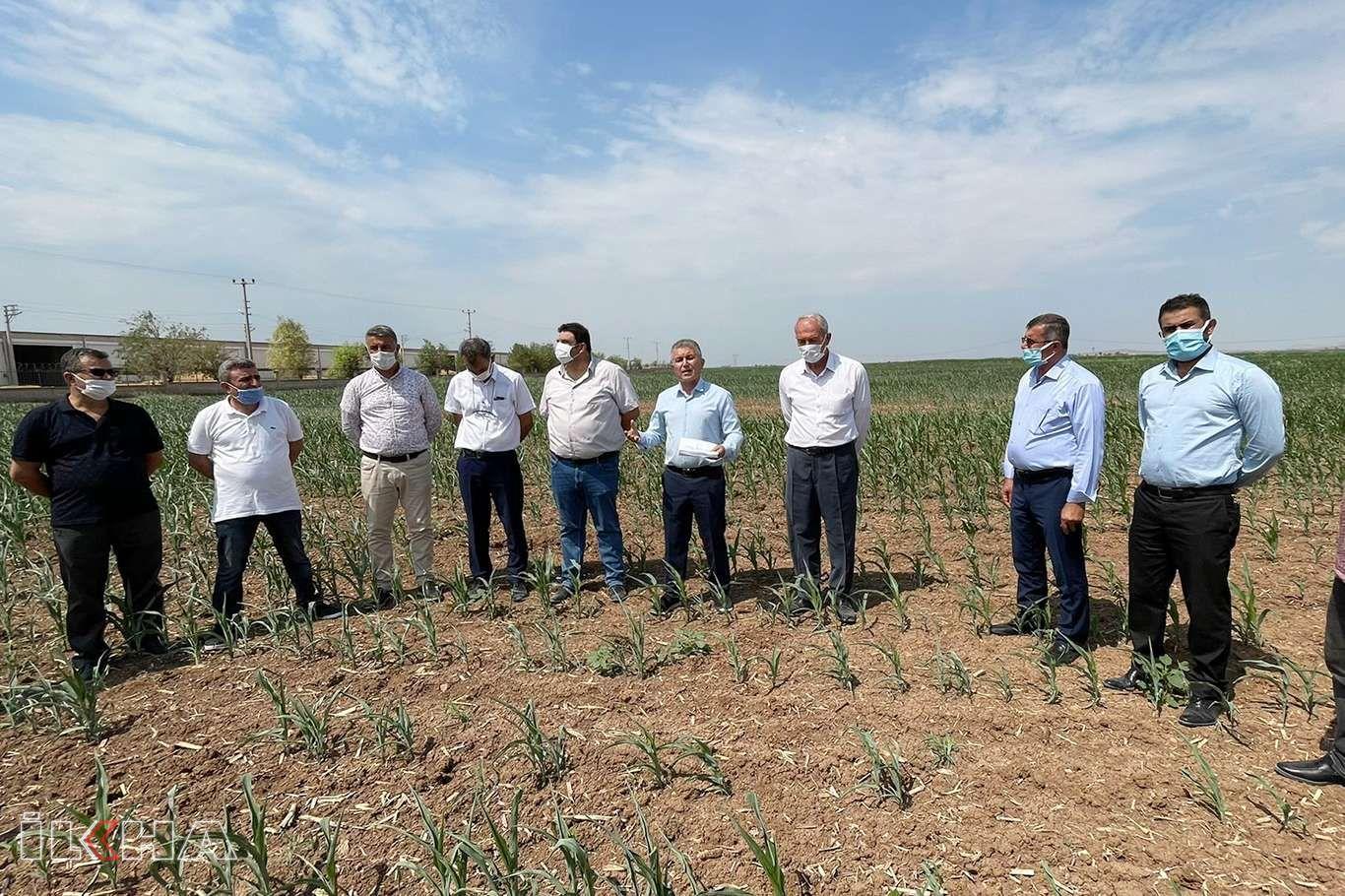 STK ve muhtarlardan çiftçiler için hükümete acil elektrik desteği çağrısı