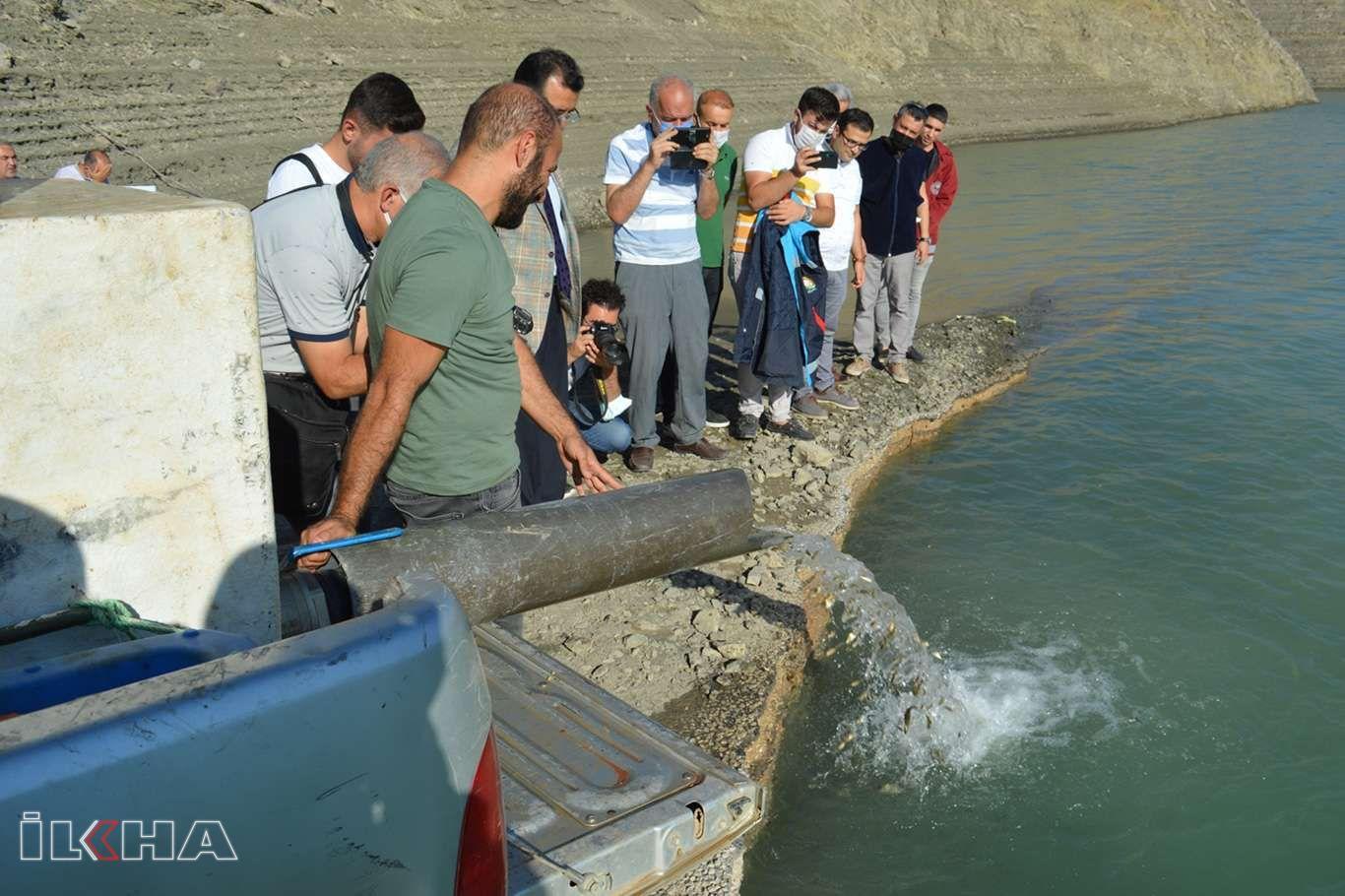 Siirtte gölet ve barajlara bir milyon 486 bin pullu sazan bırakıldı
