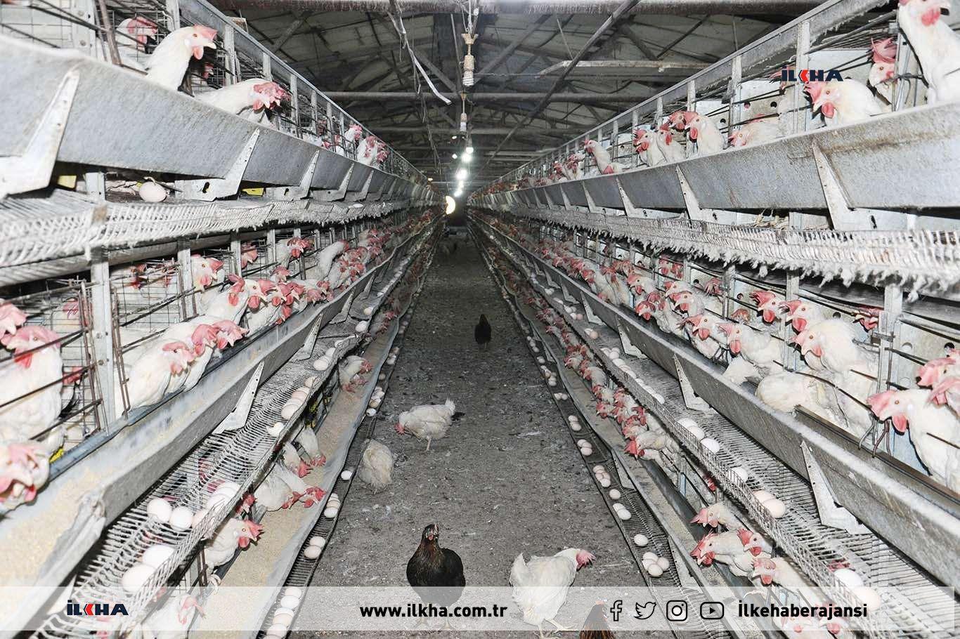 Üreticiler yumurta fiyatlarındaki artış hakkında ne düşünüyor?