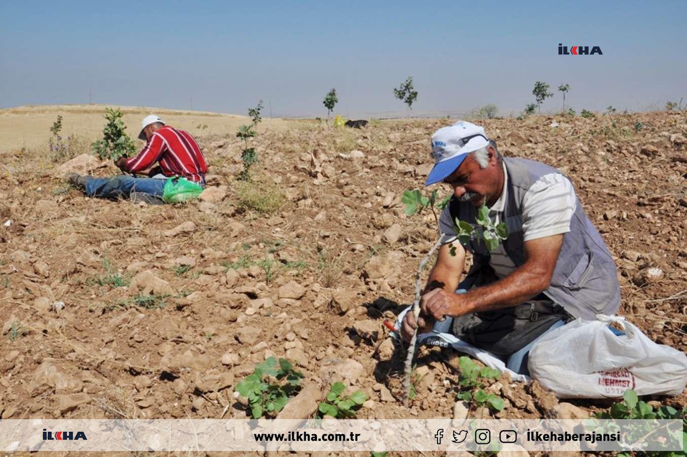Türkiyenin yüzde 55i şiddetli kuraklık yaşıyor