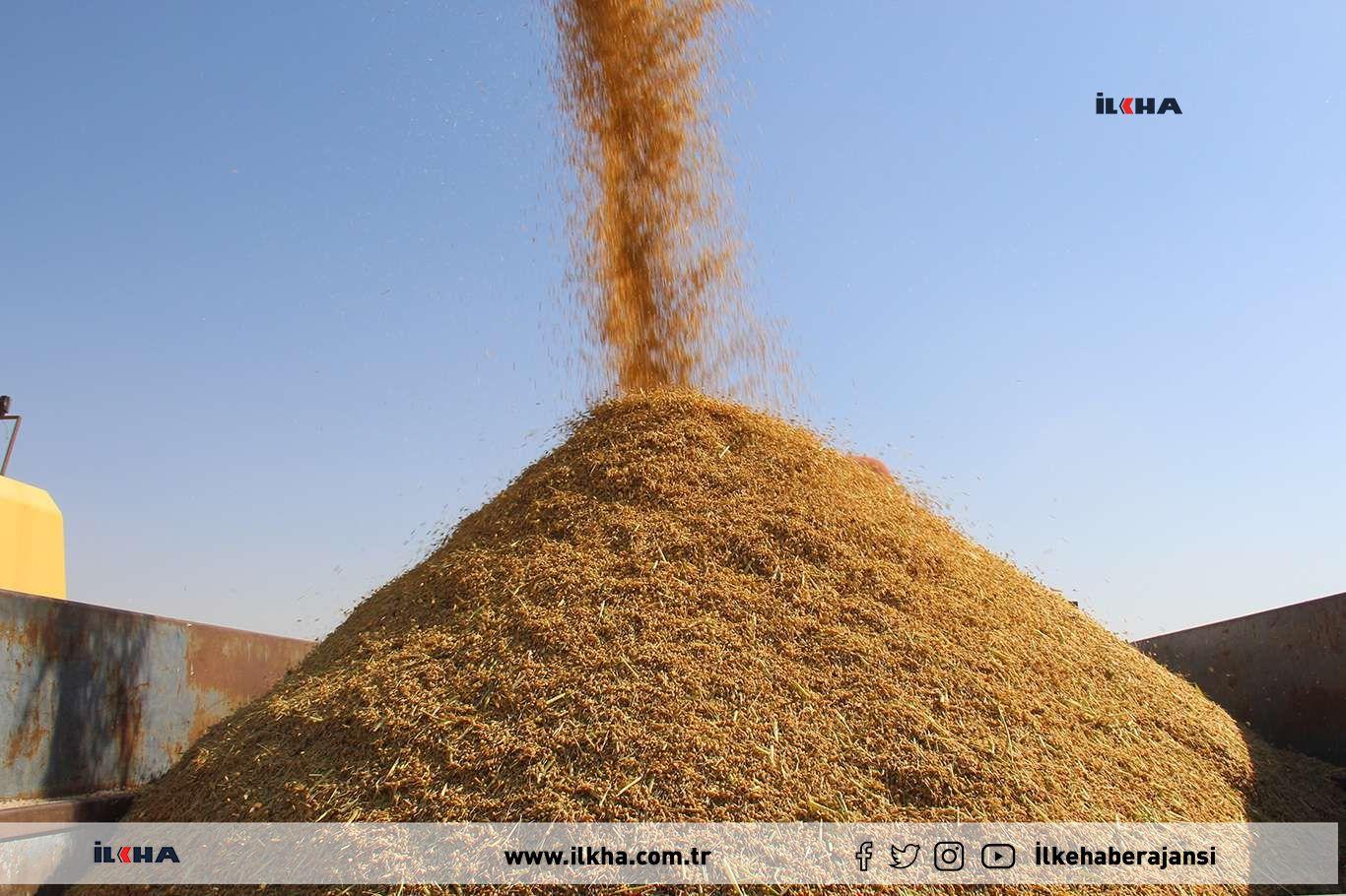 Kuraklığın etkisiyle Karacadağ pirinç fiyatları arttı